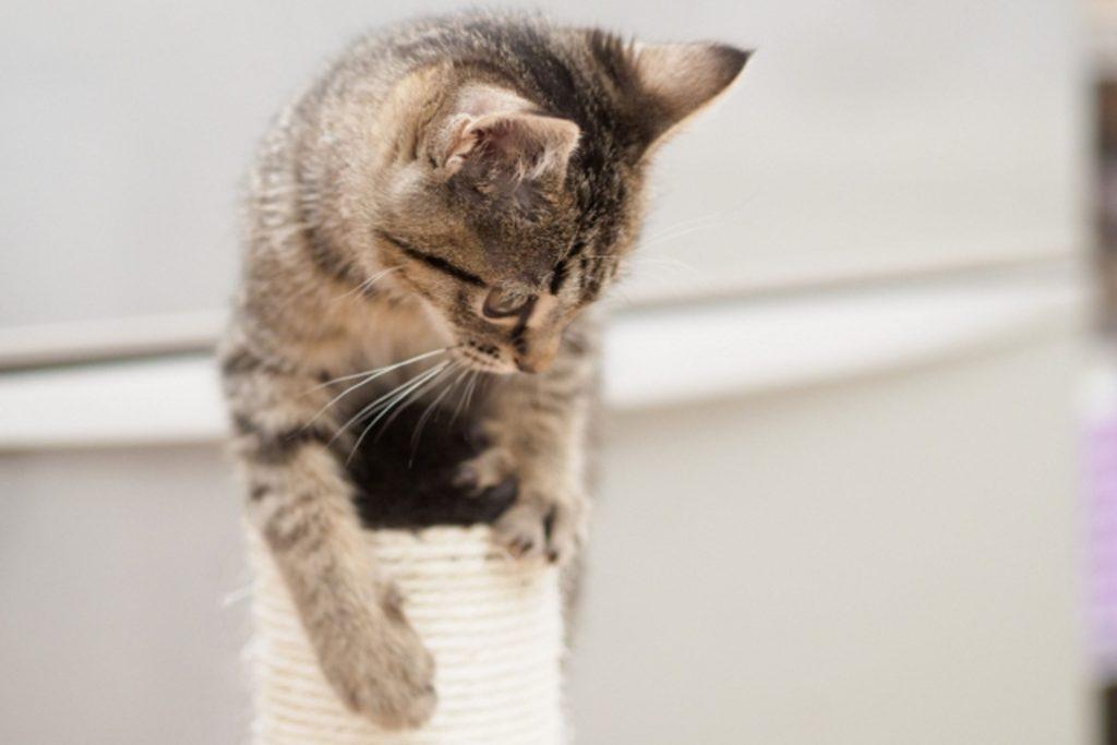 ポールにつかまる子猫