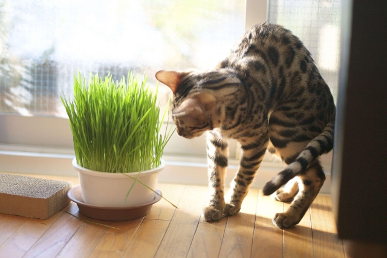 ペットグラスと猫