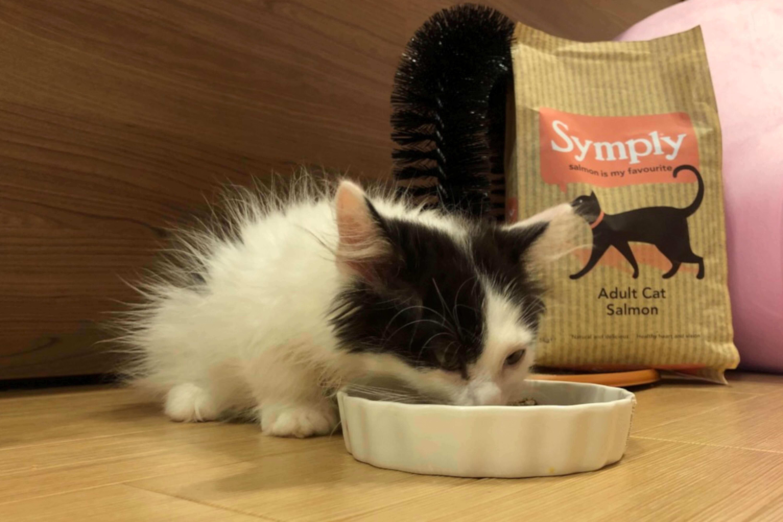 シンプリーを食べるごま吉